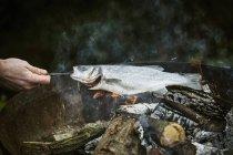 Chef griller du poisson sur le barbecue — Photo de stock