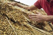 Homme, couvrir un toit de chaume — Photo de stock
