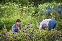Femmes travaillant dans le parterre de fleurs — Photo de stock