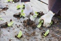 Piccoli impianti messi a dimora nel terreno — Foto stock