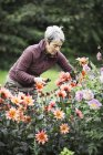 Woman cutting flowers — Stock Photo