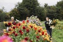 People working in an organic flower nursery — Stock Photo