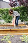 Woman watering seedlings in a bed. — Stock Photo