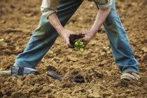 Man planting plant in soil — Stock Photo