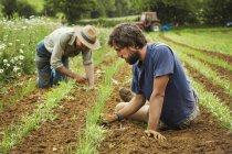 Мужчины, ухаживающие за маленькими растениями — стоковое фото