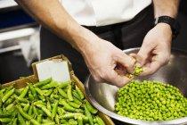 Chef, écosser les petits pois frais — Photo de stock