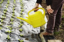 Person using a watering can — Stock Photo