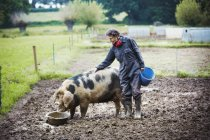 Woman standing next to pig eating — Stock Photo