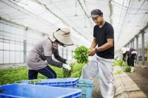 People working in a greenhouse — Stock Photo