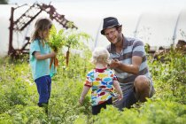 Man, toddler, and girl harvesting carrots — Stock Photo