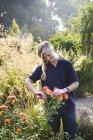Female gardener cutting flower — Stock Photo