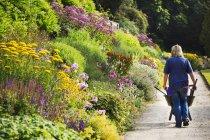 Poussant brouette jardinier — Photo de stock