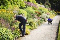 Giardiniere che lavora su confine misto di fiori — Foto stock