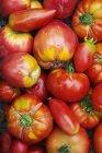 Tomates en différentes formes et tailles — Photo de stock