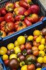 Ящик свіжі стиглих помідорів — стокове фото