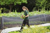 Woman walking across a garden — Stock Photo