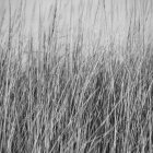 Ветреная трава — стоковое фото