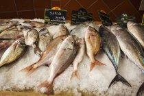 Anzeige von Frischfisch auf Eis — Stockfoto