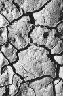 Закрыть треснувшую землю — стоковое фото