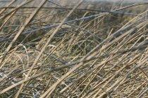 Erba secca in prato — Foto stock