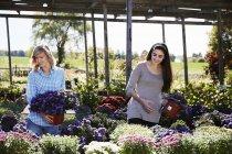 Two women choosing flowering plants — Stock Photo