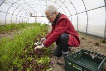 Жінки, що працюють з рослин — стокове фото