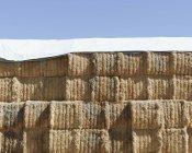Брезентовое покрытие тюков сена — стоковое фото
