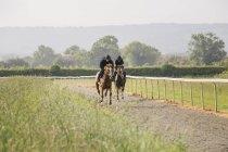 Deux chevaux et cavaliers sur le chemin de galops — Photo de stock
