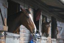 Лошади глядя из коробки киосков — стоковое фото