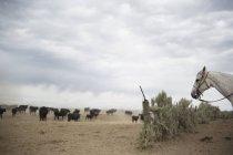 Dusty rural landscape — Fotografia de Stock
