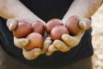 Pessoa que detém ovos frescos . — Fotografia de Stock