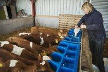 Donna versando il latte in una mangiatoia — Foto stock