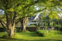 Jardín con árboles, césped - foto de stock