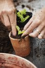 Person planting seedling — Stock Photo