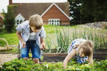 Boy and girl standing by a vegetable bed — Stock Photo