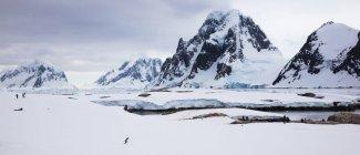 Pessoas caminhando entre pinguins — Fotografia de Stock