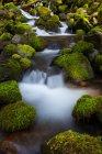 Arroyo de la ladera selva tropical - foto de stock