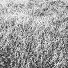 Мороз покриті травою — стокове фото