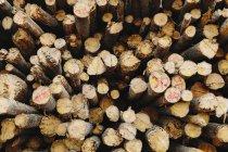 Montón de troncos de madera cortada — Stock Photo