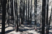 Recovering forest after fire damage in Wenatchee national forest in Washington. — Stock Photo