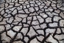 Fango screpolato sulla superficie del terreno nel Parco Nazionale del Chobe, Botswana — Foto stock