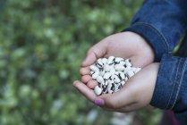 Дитини, проведення сушать квасолю в жмені, Закри. — стокове фото