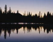 Silhouette of pine trees on edge of Reflection Lakes in Mount Rainier national park, Washington — Stock Photo