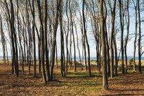 Bosque de olmos otoñales en Puget Sound al atardecer, Estados Unidos . - foto de stock