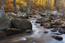Rocky stream in forest with autumn leaves and foliage. — Stock Photo