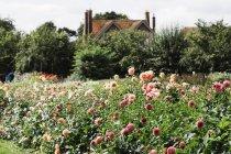 House and garden of organic flower nursery. — Stock Photo