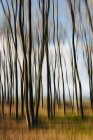 Alberi d'acero nel paesaggio autunnale con movimento sfocato . — Foto stock