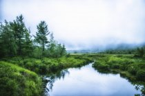Green meadow and waterway in Acadia National Park in Maine. — Stock Photo