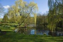 Donna e cane in piedi sul molo del lago sotto l'albero di salice piangente. — Foto stock