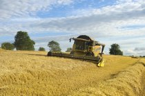 Combiner champ de coupe moissonneuse de maïs . — Photo de stock